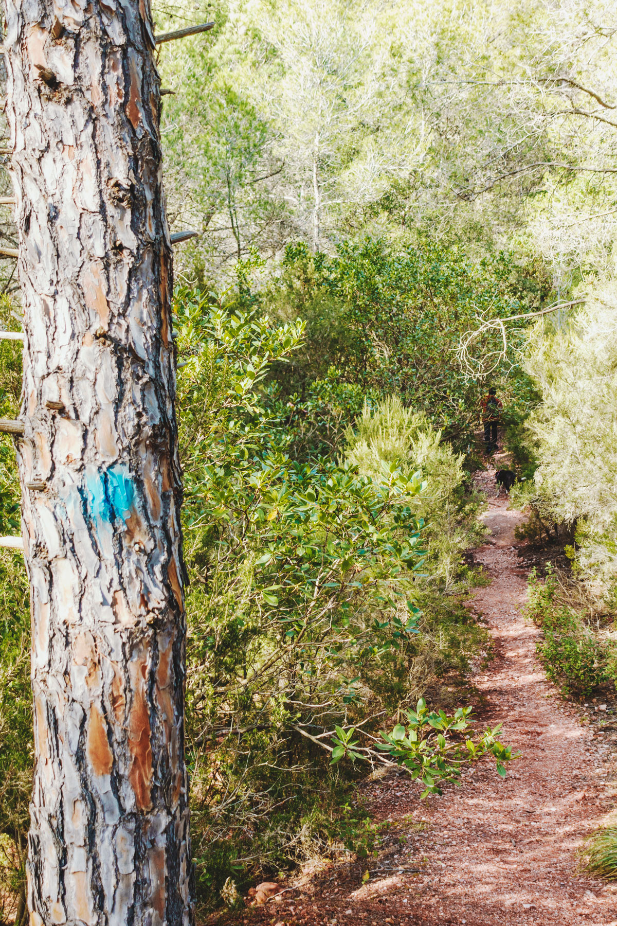 Blaue Markierung an Baumstamm zeigt den Weg an.