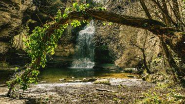 Wasserfall umgeben von Bäumen.