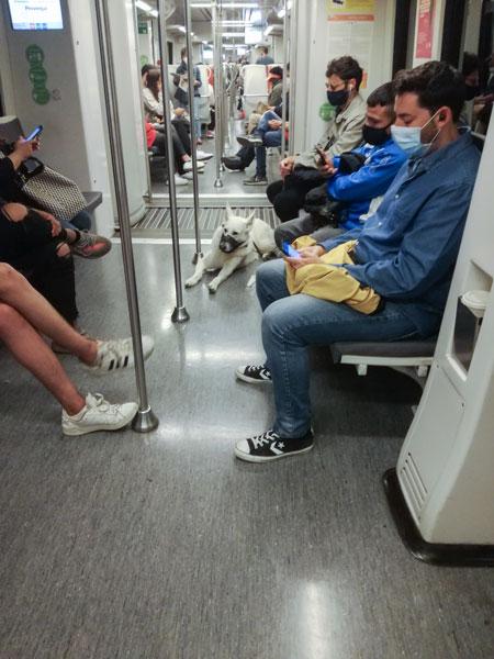 Hund und Menschen mit Maulkorb in einer Metro in Barcelona.